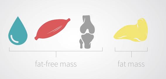 medición de grasa en el cuerpo
